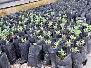 Meram Belediyesi fidan ve bitkileri kendi üretiyor