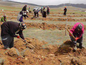 Toprak erozyonu için ağaçlandırma çalışması