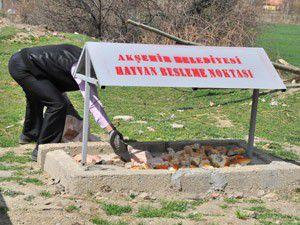 Akşehir, sokak hayvanlarını unutmadı