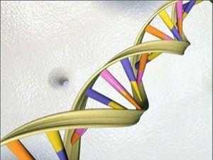 Beyni yaşlandıran gen bulundu