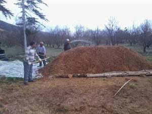 Budama atıkları kompost yapılıyor