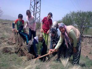 Seydişehirde ağaçlandırma çalışmaları