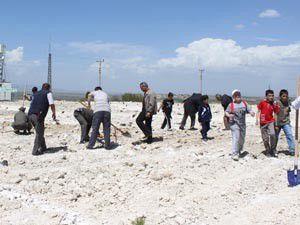 Beyşehirde 2 bin 500 fidan toprakla buluştu