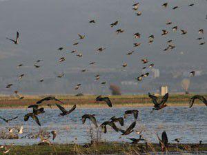 Beyşehir Gölü Milli Parkı kuş cenneti gibi