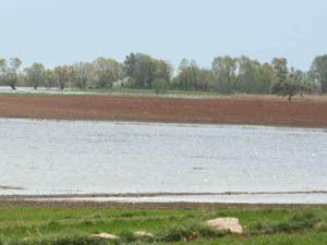 Beyşehir Gölünde sular yükselmeye devam ediyor