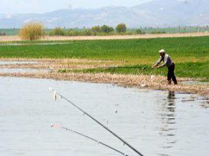 Beyşehirde tarlada balık avına çıktılar