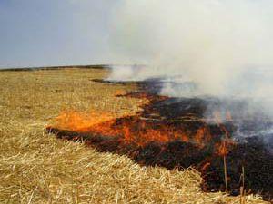 Konya Ziraat Mühendisleri Odası çiftçileri uyardı