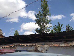 Ağaçtan düşen kişi hayatını kaybetti