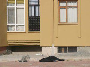 Evin penceresinden düşen yaşlı adam öldü