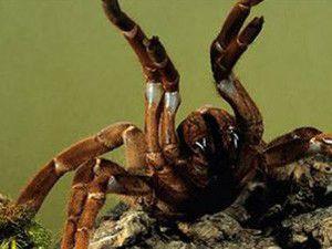 Katil örümcek alarmı