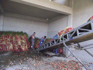 Kuluda 400 ton kuru soğan çöpe döküldü