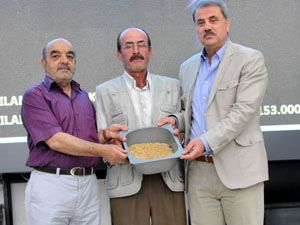 İlk mahsul buğday satıldı