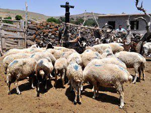 Koyun ağıllarında korkuluktan güvenlik