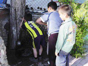 Çam ağacından susuzluk gideriyorlar