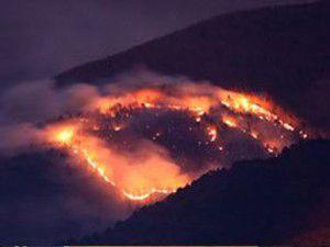 Karabükte orman yangını çıktı