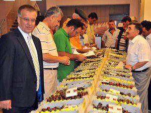 Akşehir kirazi festivali başladı