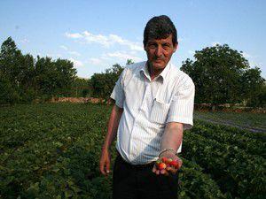 İlmende Organik Çilek, Kiraz Kültür Festivali