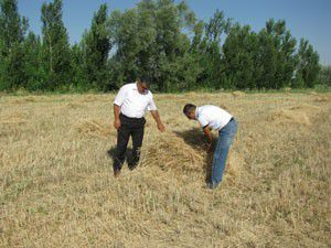 Ereğlide buğday hasadı denetimleri