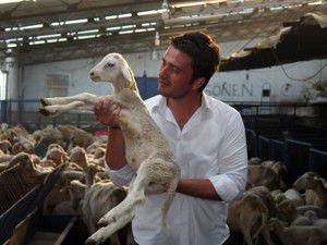 Koyun çiftlikleri çoban bulamıyor