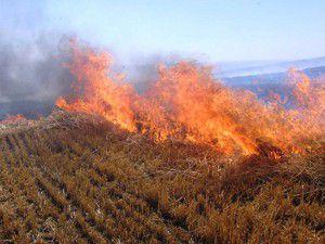 Saman kıymete binince anız yangınları bitti