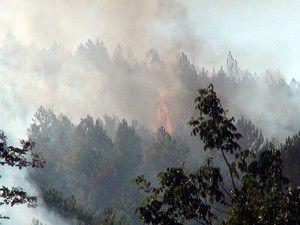 Akşehirde orman yangını