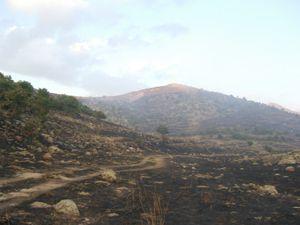 Konyada 80 hektarlık alan kül oldu