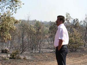 Orman yangınında 10 hektarlık alan zarar gördü