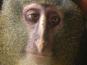 Bu Maymun Türü Tesadüfen Keşfedildi