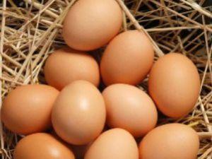 Yumurtaya Yüzde 100 Okul Zammı