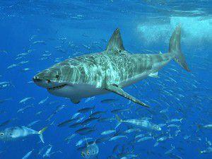 Köpekbalığı sayesinde kurtuldu