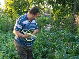 Karatay Hobi Bahçelerinde bağ bozumu başladı