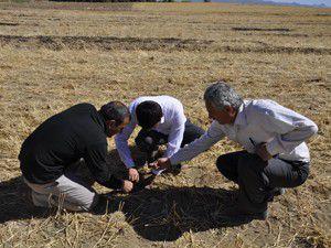 Anıza ekim artık Seydişehirde de yapılıyor