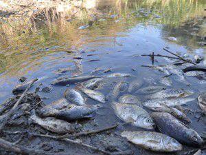 Yol çalışmasında balıklar telef oldu