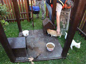 Selçukluda kediler de ev sahibi oldu