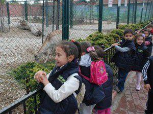 Ana sınıfı öğrencileri hayvanat bahçesini gezdi