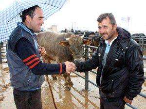 Beyşehirde hayvan pazarında hareketlilik