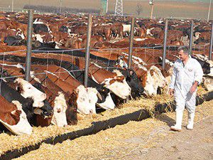 Canlı hayvan ithalatında gümrük vergisi arttı