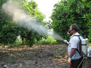 Karamanda belediyenin ilaçlaması 5 kişiyi etkiledi