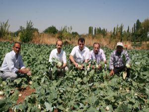 Konyalı çiftçi iyi tarımı öğrenecek