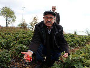 Beyşehirde organik tarım atağı