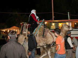 Beyşehirde deve turları ilgi görüyor