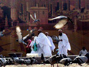 Kabe güvercinleri koruma altına alınıyor