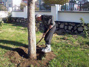 92 yaşındaki dedenin ağaç sevgisi