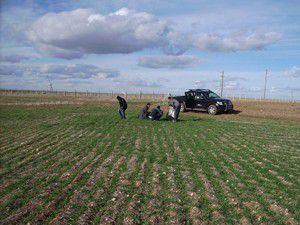 Sarayönünde hububat ekili tarlalar incelendi
