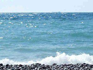 Karadenizdeki canlı türleri yok oluyor
