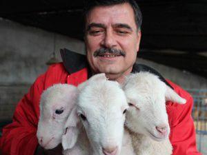 Beyşehirde kuzu cenneti