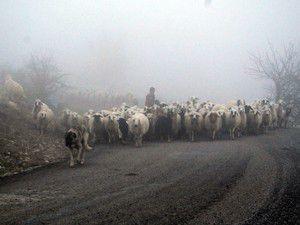 Konyanın ilçesinde yoğun sis