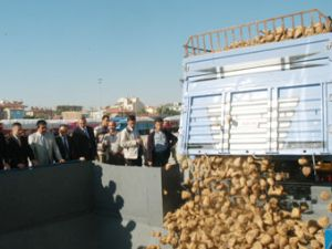 Konya ve Çumra Şeker Pancar alımına başladı