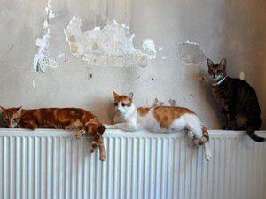Evinden 67si ölü, 166 kedi çıktı!
