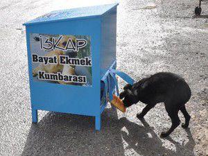 Sokak hayvanları için anlamlı uygulama